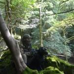 Woodland Ambush